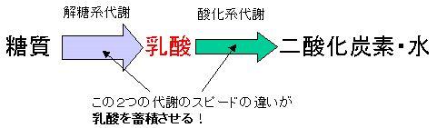 乳酸の蓄積